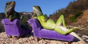 Green lizards reclined on purple loungers in the desert
