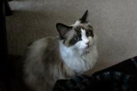 Luna, 11 months