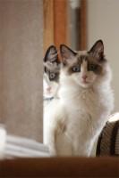 Obi and Luna at 6 months