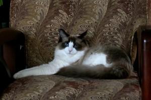 Obi on his petting chair